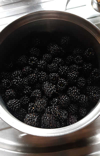 bowl of freshly picked blackberries